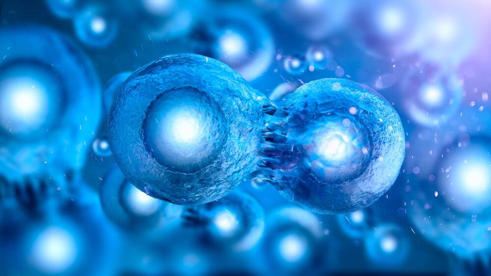 embriyo-2