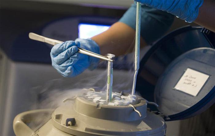 embriyo dondurma işlem nasıl yapılır